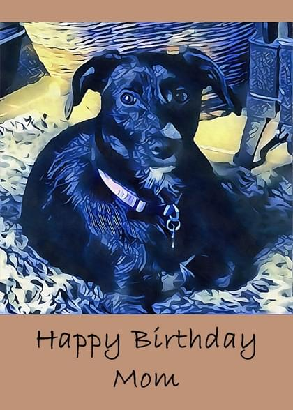 Send A Dogs Birthday Card With Your Own Handwriting Signed Sealed Delivered At